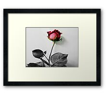 in disguise... Framed Print