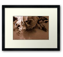 A faded rose Framed Print
