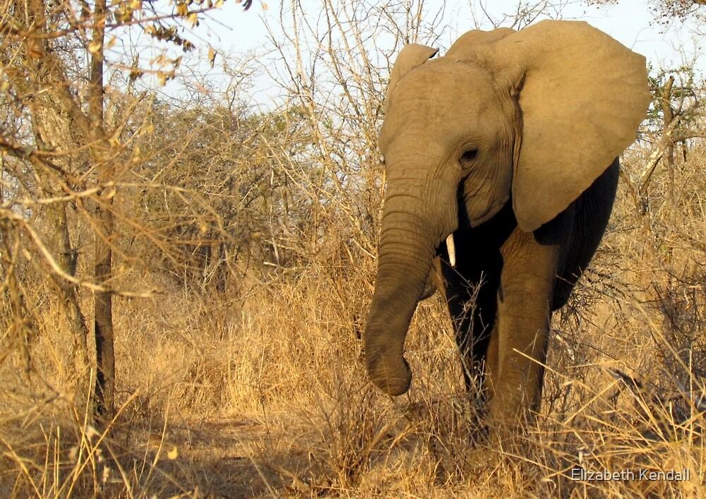 """I'm the largest living land animal!"" by Elizabeth Kendall"