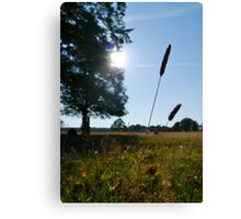 Richmond Park, SW London Canvas Print