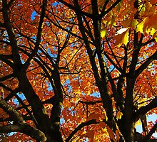 iphone Autumn leaves 2 by buttonpresser