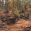 Amnicom State Park  by by M LaCroix