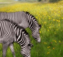 Zebras In Flowers by Carolyn  Fletcher