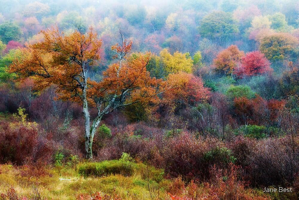 October Fog by Jane Best