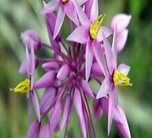 Purple Tassels by Rocksygal52