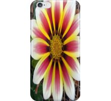 This is a Gazania Flower. iPhone Case/Skin