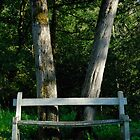 Bench in front of forest trees by Sami Sarkis