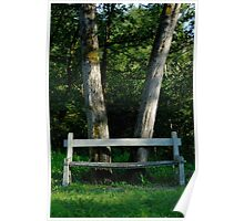 Bench in front of forest trees Poster