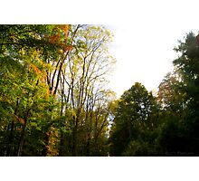 Forest in Time Photographic Print