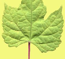 Grape Leaf iPhone Cover by Betty Mackey