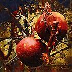 Forbidden Fruit by RC deWinter