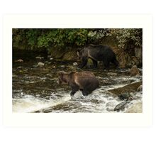 Grizzly Bears, Knight Inlet Art Print