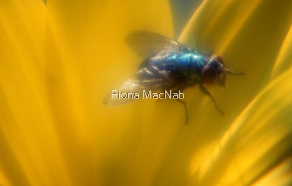 Fly by Fiona MacNab