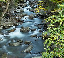 i West Prong Little Pigeon River by Gary L   Suddath