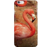 Flamingo - iPhone Case iPhone Case/Skin