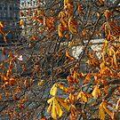 Autumn by the Seine by Deborah Pass