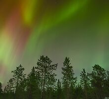 Northern lights by franceslewis