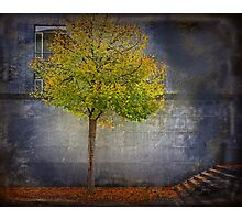 Autumn in town Photographic Print