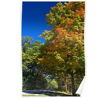 Maple Tree at Maple Lake Poster