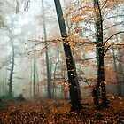 forest colors by Iris Lehnhardt