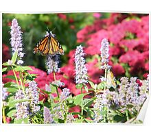 Butterflies, Liberty State Park, New Jersey Poster