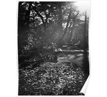 Autumn Rays - Central Park - New York City Poster