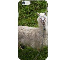 Llama At Lago De Busa, Ecuador iPhone Case/Skin