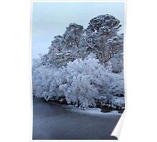 Frost Bites Poster