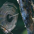 Web and Birch by tanmari