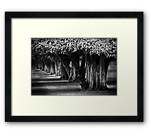Hampton Court Gardens Framed Print