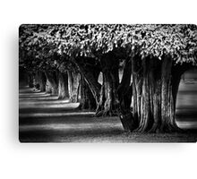 Hampton Court Gardens Canvas Print