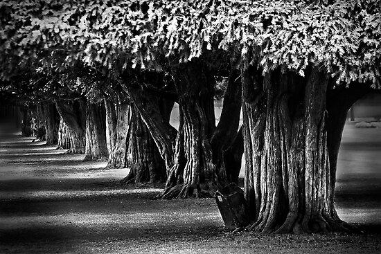 Hampton Court Gardens by Damienne Bingham