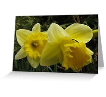 Daffodil Delights Greeting Card