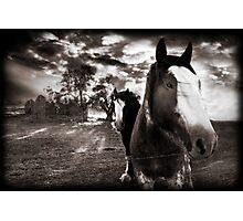Horses 1 Photographic Print