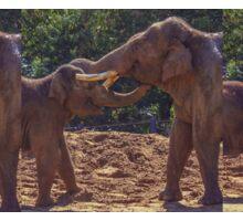 Mamma & Baby Elephant  Sticker