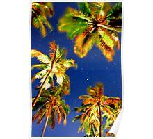 Palms in the full moon light. Poster