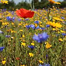 Wildflower meadow by Fiona MacNab