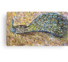 Peacock and the rainbow Canvas Print