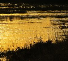 On Golden Pond by Antionette