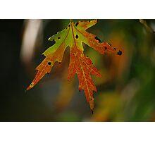 Fall Status Update Photographic Print