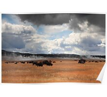 Bisons near hot springs Poster
