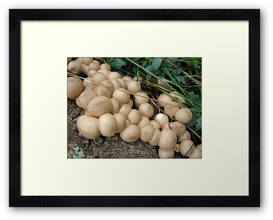 Puffball Convention by MotherNature