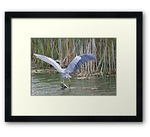 Wings Of Glory  Framed Print