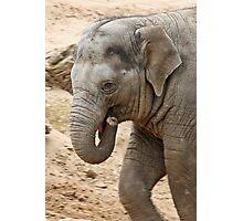 Cheeky baby elephant  Photographic Print