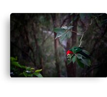 King Of The Tree Canvas Print