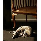 Whippet! I-Phone case by Roz McQuillan