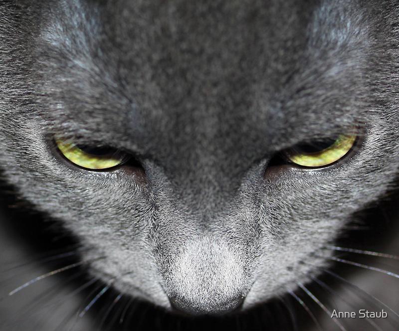 Green eyes by Anne Staub