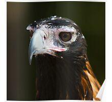 Eaglehawk Poster
