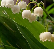THE LILY OF THE VALLEY by Heidi Mooney-Hill