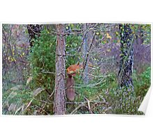 The Squirrel With The Bushy Tail Poster